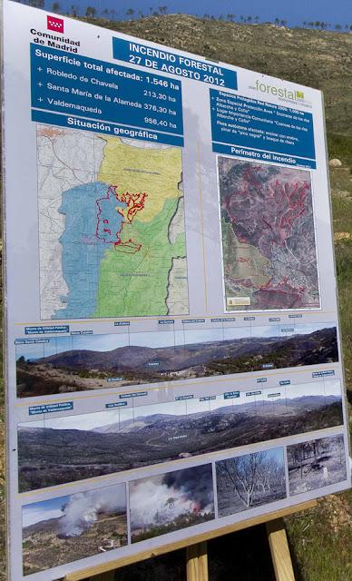 Fase IV del proyecto de restauración del monte de Valdemaqueda