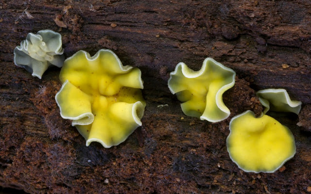 Foto-foto Jamur yang menakjubkan
