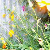 Gardening 2012 - 115_2412.JPG
