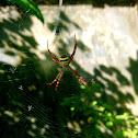Obr Spider