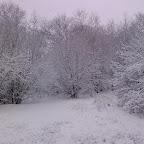 Зимняя уборка в Дендрарии 052.jpg