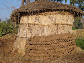Photo: A village hut outside which cow pats are dried and then stored inside