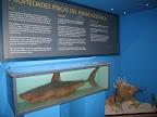 Tiburón expuesto en el Centro del Calamar Gigante