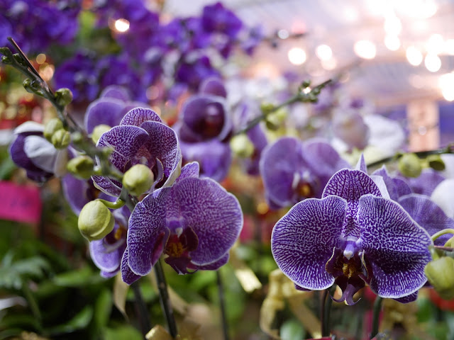 purple orchids at the Fa Hui Lunar New Year Fair in Hong Kong