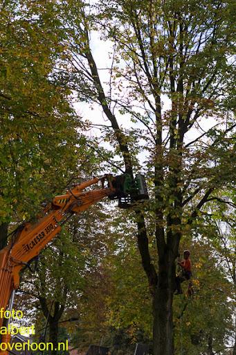 Bomen gekapt Museumlaan in overloon 20-10-2014 (13).jpg