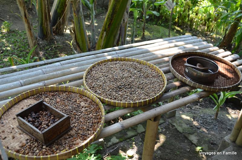 Luwak coffee - kebune bali