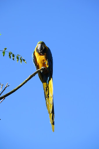 Papageien fliegen frei umher