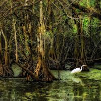 Swampy Saturday