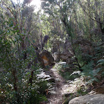 Pierces Pass Track (50429)