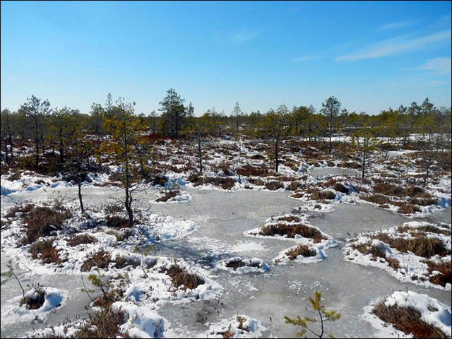 Thaw of frozen bogs, which take up as much as 80 per cent of the landmass of western Siberia, will release billions of tonnes of methane. Photo: Sergey Kirpotin
