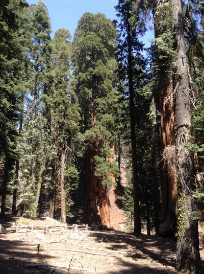 Sequoia National Park, Giant Forest, General Sherman Tree
