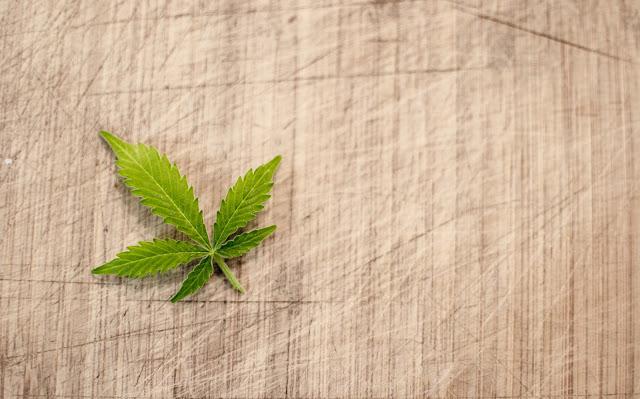 Growing Medicinal Marijuana: A Beginner's Guide