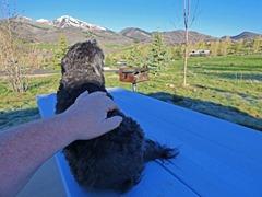 Skruffy on COLD metal table, Frosty morning, Lake Jordanelle State Park