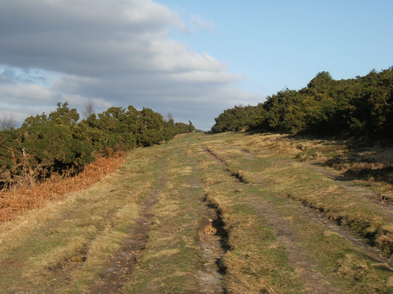 1101280061 Fire break on Ashdown Forest