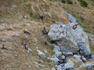 Alpine Trekking 19