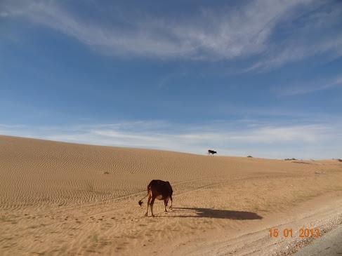 Marrocos e Mauritãnia a Queimar Pneu e Gasolina - Página 7 DSC06085