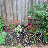 Gardening 2011 - 100_7335.JPG