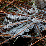 Frost-on-pine-needles_MG_3474-copy.jpg