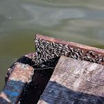 20140517_Fishing_Bochanytsia_041.jpg