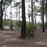 Open forest  in Little Mountain campground