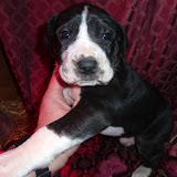 available mantle girl @ 4 weeks