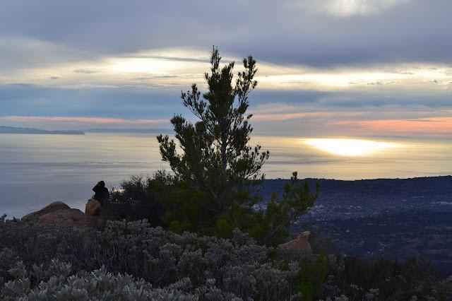 pine tree on Montecito Peak