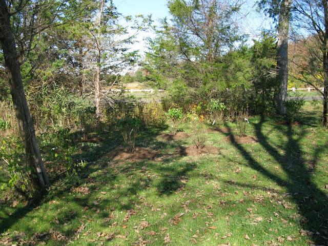 Hammo Planting - Shannon Schiesser - IMG_4969.JPG