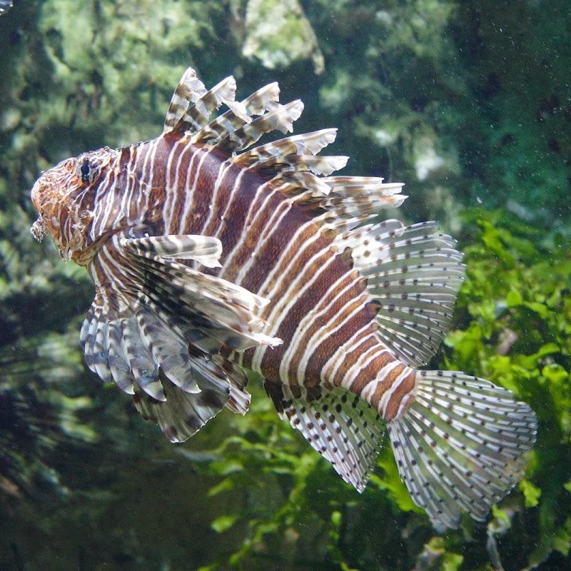 Aquarium_13.JPG