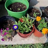 Gardening 2011 - 100_9293.JPG