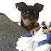 Hundehaul: Welpenerstausstattung | Ein Welpe zieht ein