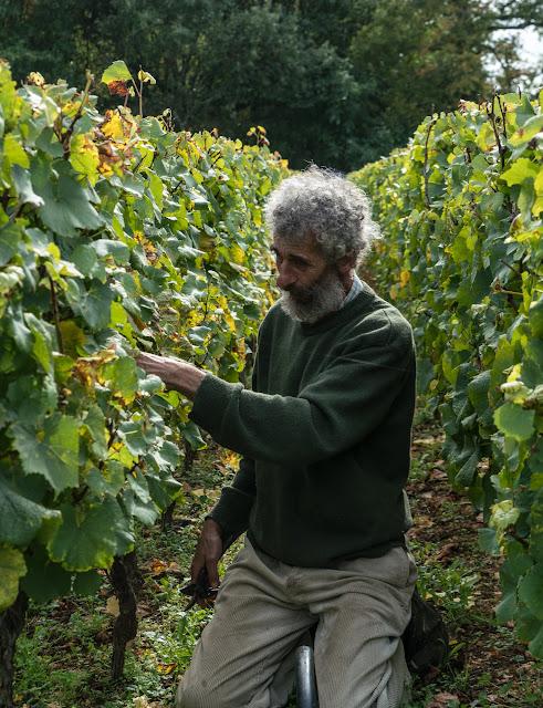 Petites vendanges 2017 du chardonnay gelé. guimbelot.com - 2017-09-30%2Bvendanges%2BGuimbelot%2Bchardonay-185.jpg