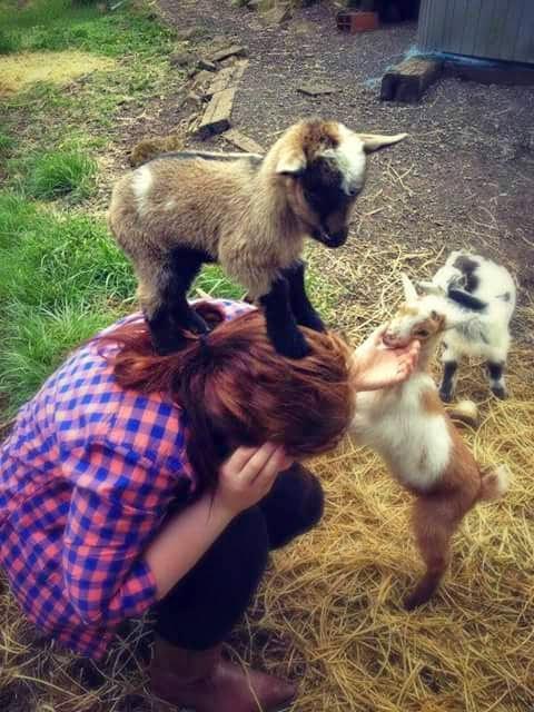 Baby Goat Pics