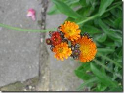 margaritas flores (44)