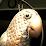 Steam Parrot's profile photo