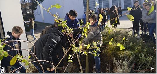 Plante-se! - Plantação de um carvalho na ESL em janeiro de 2018