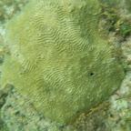 Corales en La Miel