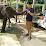aung min Thein's profile photo