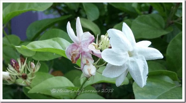 08-20-nb-jasmine