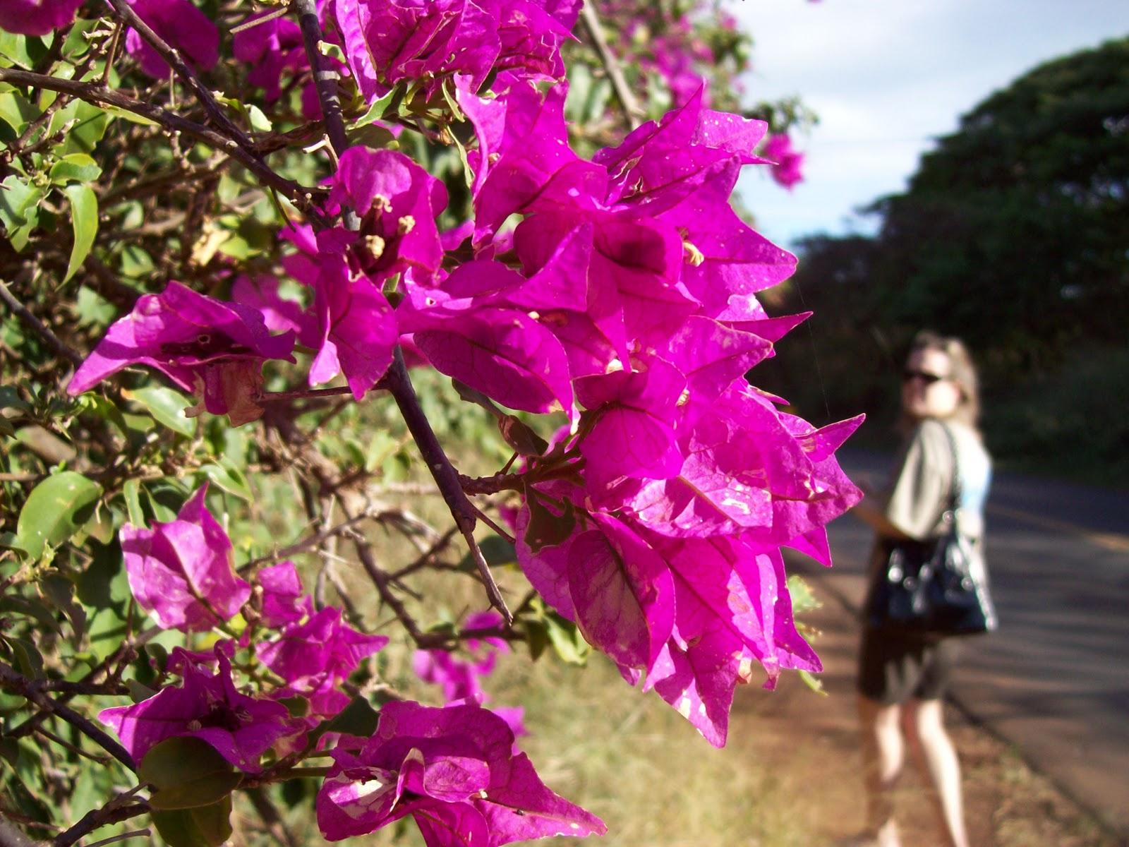 Hawaii Day 6 - 100_7630.JPG