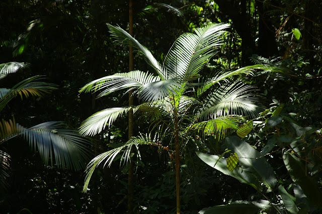Dans la forêt près d'Arariba (Ubatuba, SP), 22 février 2011. Photo : J.-M. Gayman
