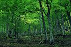 Bosque del Gumial