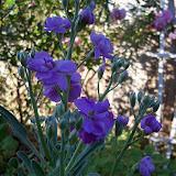 Gardening 2013 - 115_5421.JPG
