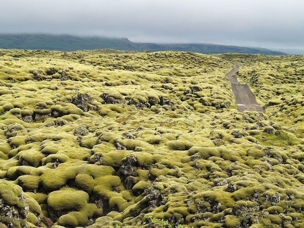 mossy-lava-fields-iceland-6