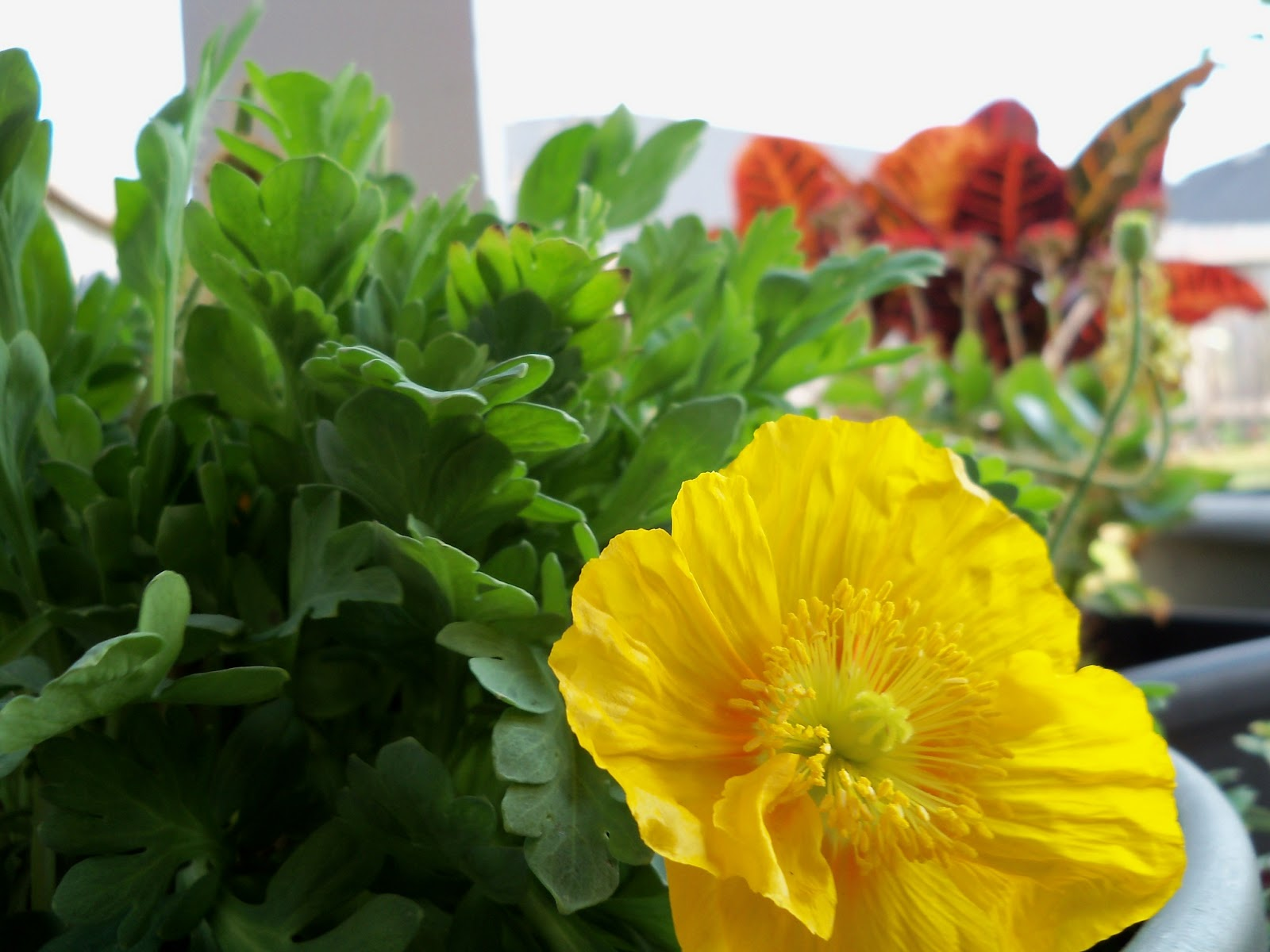 Gardening 2011 - 100_6656.JPG