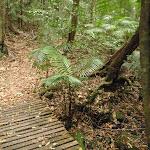 Ferns in gully (226036)