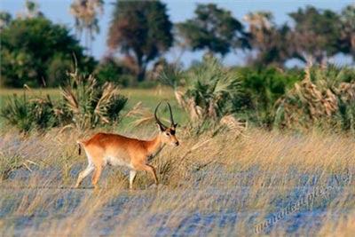 okavango-deltasi-botswana