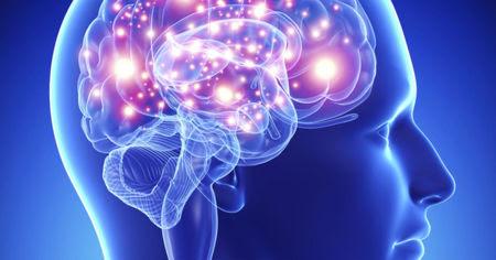 malla-cerebro.jpg