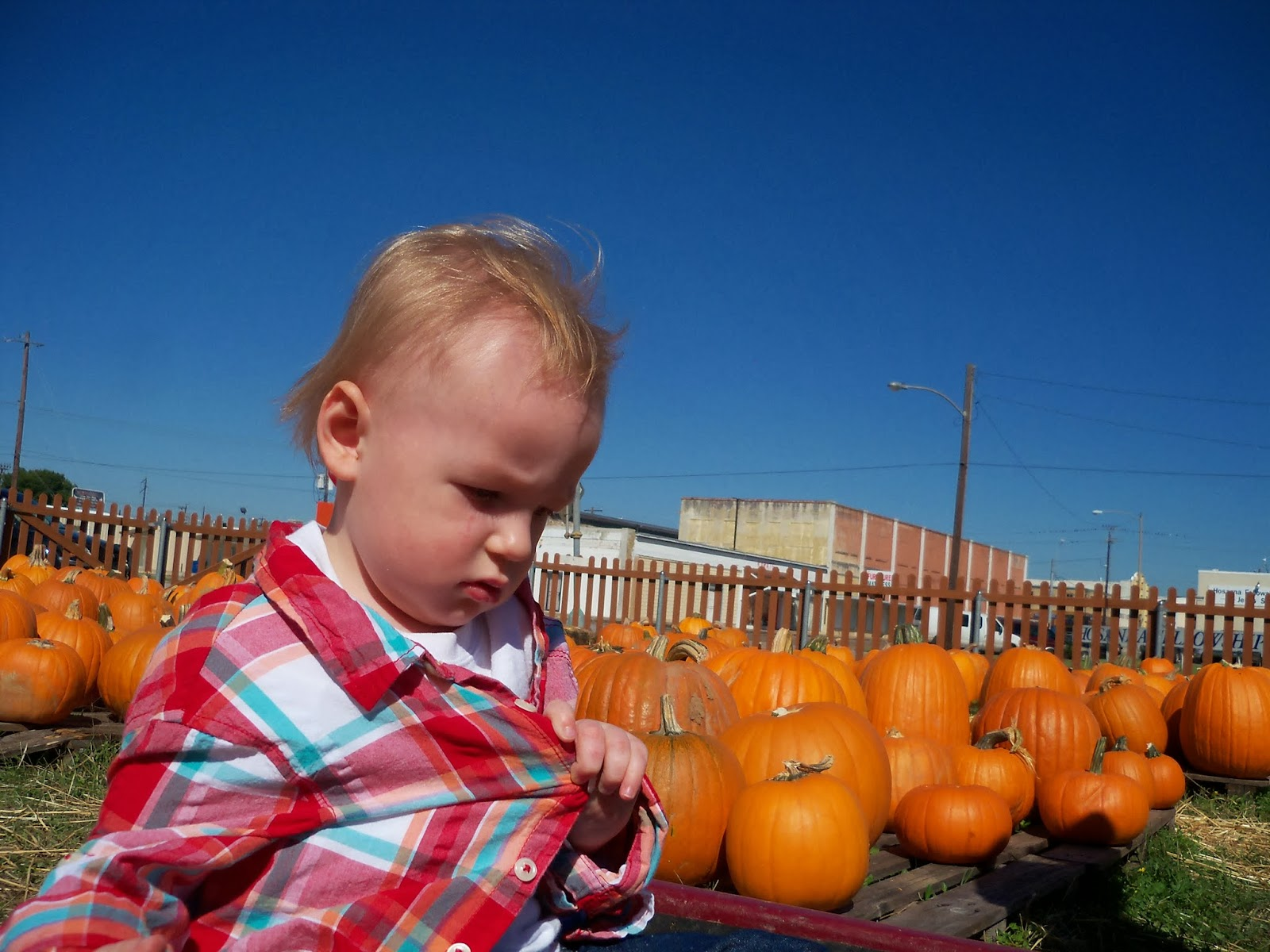 Pumpkin Patch - 115_8264.JPG