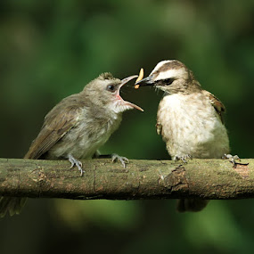 love mom #1 by Yan Abimanyu - Animals Birds