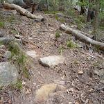 Rocky track Olney State Forest (364091)